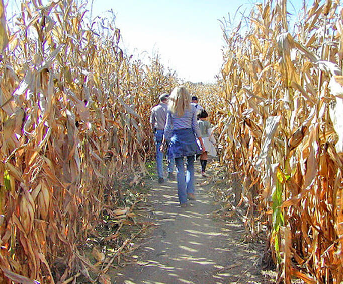 Ozarks Pumpkin Patches, Corn Mazes, & Halloween Thrills, fall activities