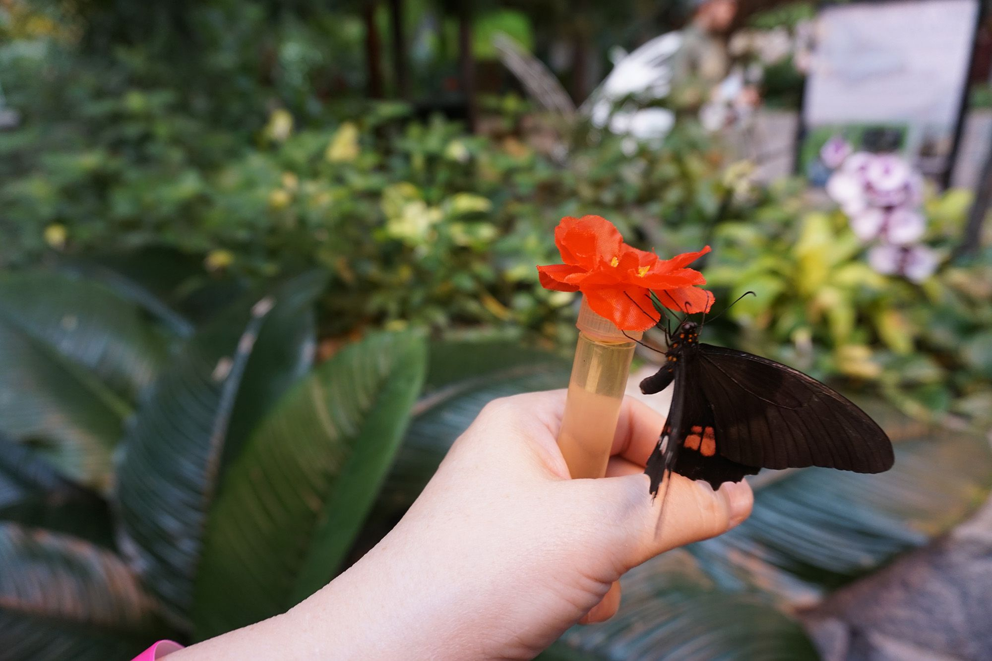 Feeding Butterflies at Butterfly Palace and Rainforest Adventure