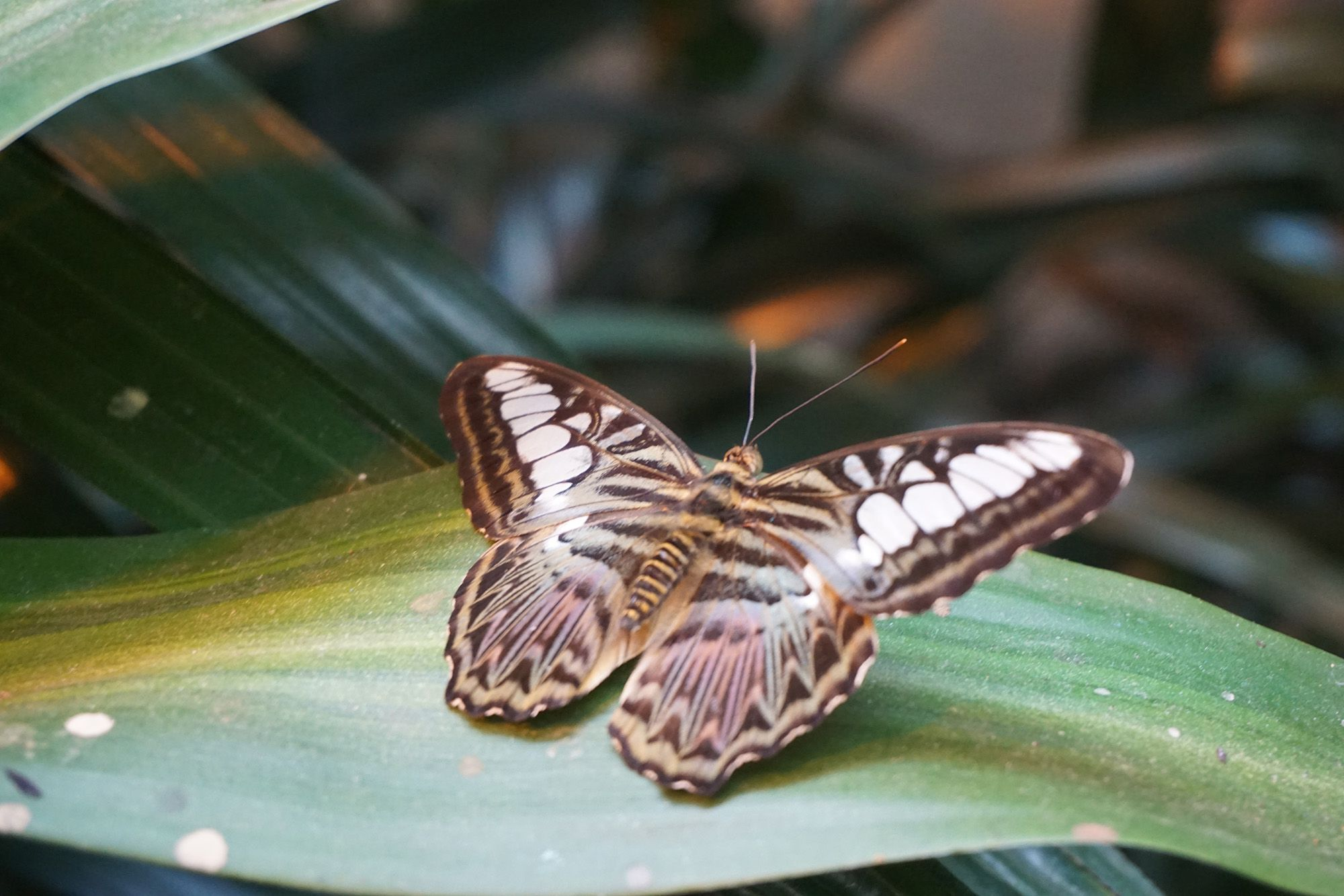 Amazing Butterflies at the Butterfly Palace and Rainforest Adventure