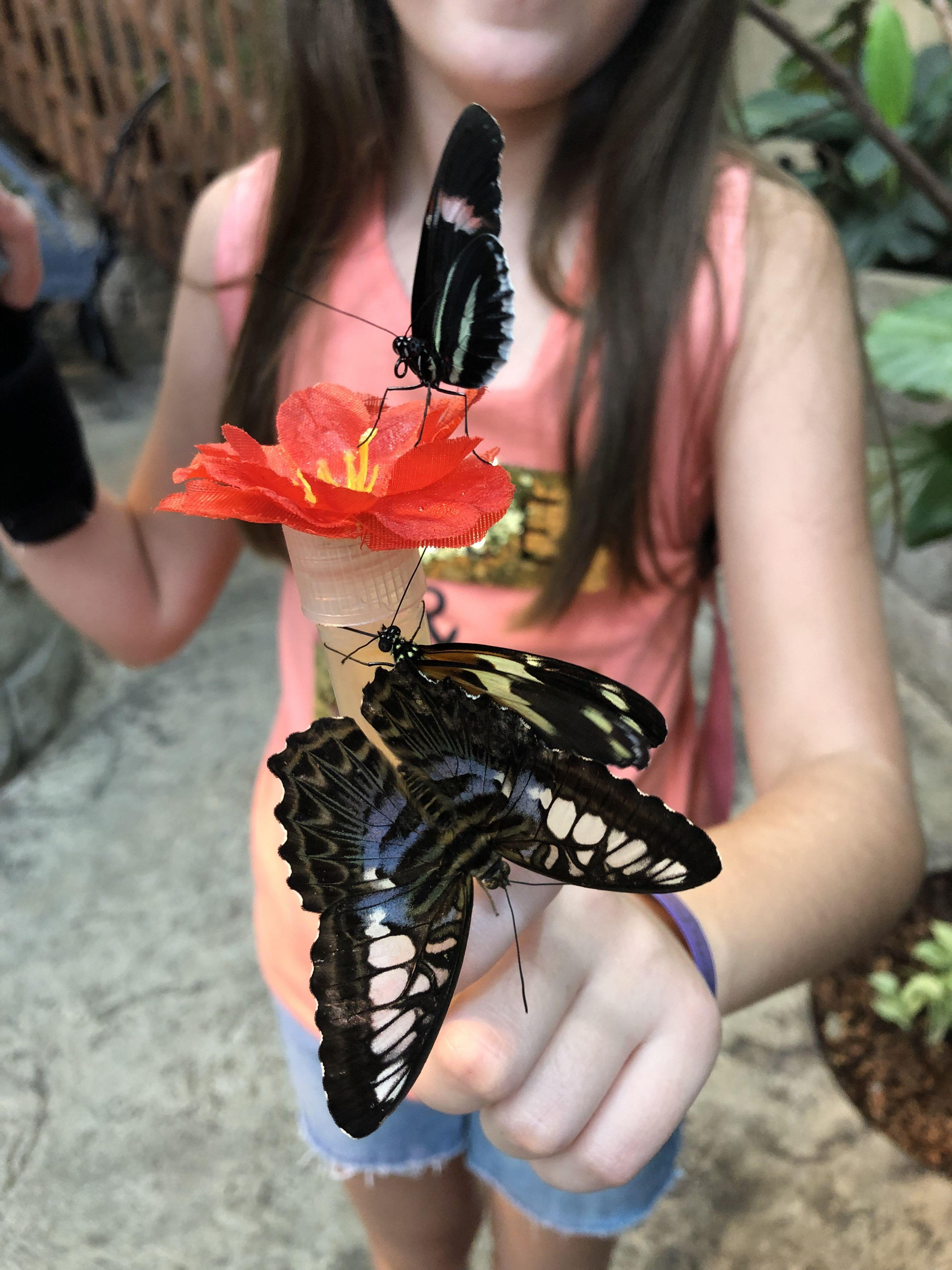 Feeding Butterflies at the Butterfly Palace and Rainforest Adventure