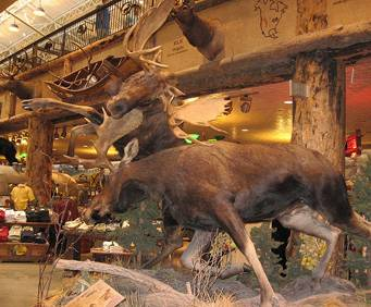 Bass Pro Shop In Springfield Mo