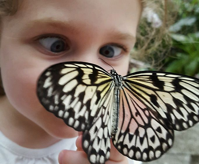 Be Amazed at the Butterfly Palace and Rainforest Adventure